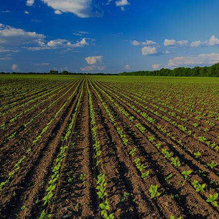 vandaele sector landbouw